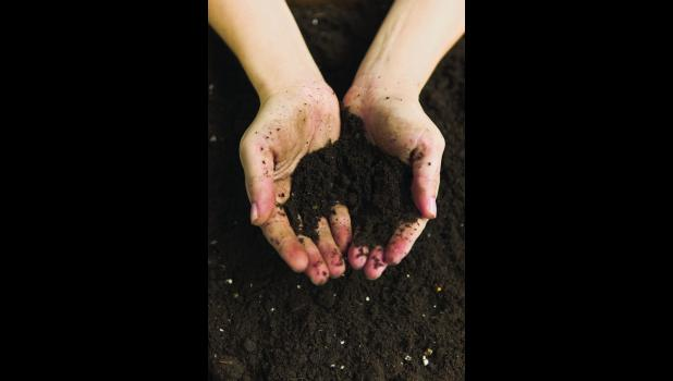 Add organic matter to improve soil.