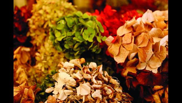 Hydrangeas are available in several colors.